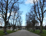 avenue of leafless trees
