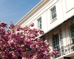 Dark pink blossom in front of a painted regency style building