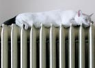 A cat asleep on top of a radiator