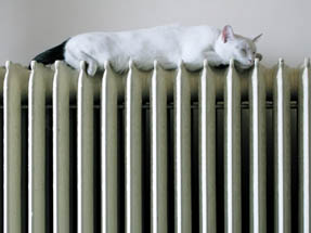 white cat with black tail asleep on a radiator