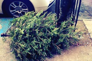 Christmas tree on the street for recycling