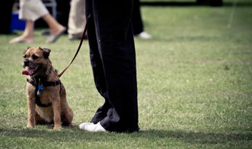 brown dog on a lead sitting on the grass at its owner's feet