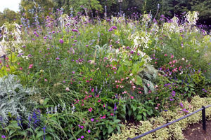 Flowering perennial planting example