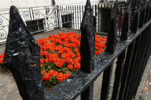 flowers and railings