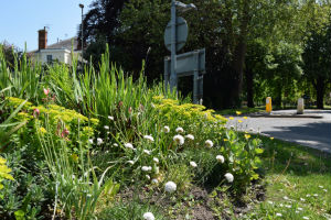 sustainable, perennial planting