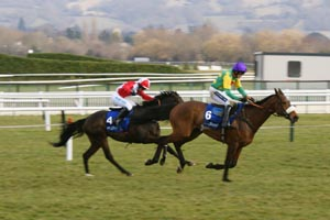Horse racing in Cheltenham