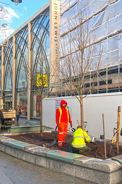 council contractor planting tree on cheltenham high street