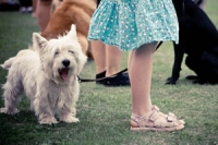girl in a summer dress with her white dog