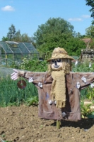Scarecrow wearing a straw hat, brown coat and beige knitted scarf in front of allotment plots and greenhouse.