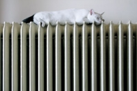 white cat with black tail sleeping on old fashioned radiator