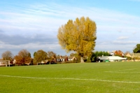 Grassy football pitch at Burrows playing fields with large tree and houses in the background